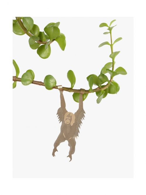Another studio Plant animal oran-oetang orangutan